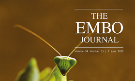EMBO Cover No. 2