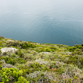 Am Cape Point