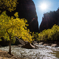 Herbstfarben am Virgin River